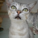 Rescued kittens receive medical treatment