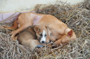 Some rescues become permanent residents